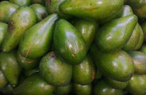 Avocados – a dangerous trend
