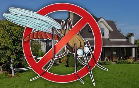 The complexities of pest control
