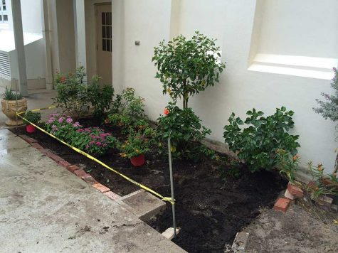 Progressively, the butterfly garden began to transform from the original area of dust dirt and weeds.