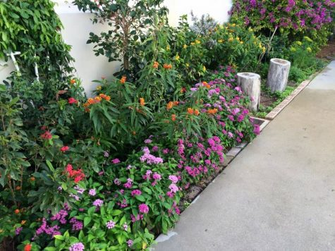 The thriving butterfly garden outside Building 9.