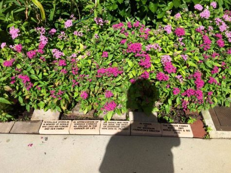 Closer photo of some bricks lining the garden.