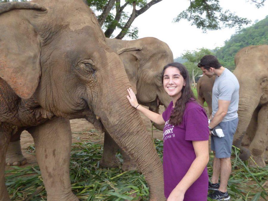 Communications junior Tom Kapitulnik petting an elephant at the Elephant Nature Park.