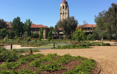 Summer at Stanford